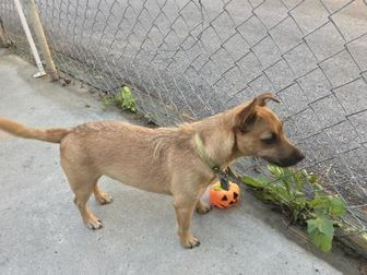 Jack Russell Terrier Mix Dog for adoption in New Freedom, Pennsylvania - Jack