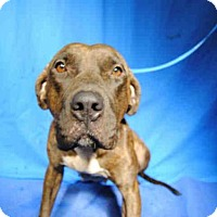 Adopt A Pet :: *DELILAH - Ocala, FL
