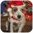 Photo 1 - Terrier (Unknown Type, Small)/Lhasa Apso Mix Dog for adoption in Lockhart, Texas - Wrangler