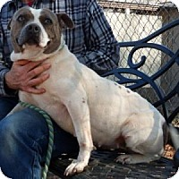 Adopt A Pet :: Queenie - Athens, GA