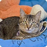 Adopt A Pet :: Widget - Grand Rapids, MI