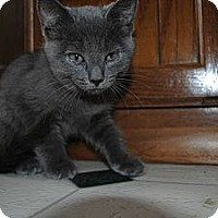 Adopt A Pet :: Lewis - Paintsville, KY