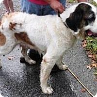 Adopt A Pet :: Molly - Dandridge, TN