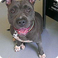 Adopt A Pet :: Crystal - Berlin, CT