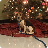 Adopt A Pet :: Millie - Nashville, TN