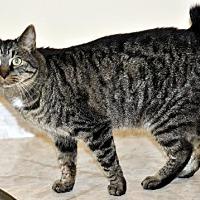 Adopt A Pet :: Angie - Liberty, NC