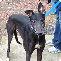 Adopt A Pet :: Grinding Garr - Gerrardstown, WV