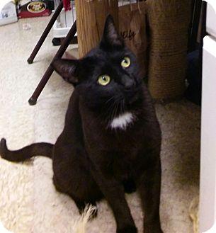 Domestic Shorthair Cat for adoption in Yorba Linda, California - Maggie