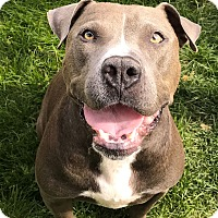 Adopt A Pet :: Max - Aurora, CO