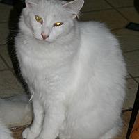Adopt A Pet :: AgyatikPouzyatik/COURTESY POST - Baltimore, MD