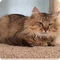 Adopt A Pet :: Nate - Alpharetta, GA
