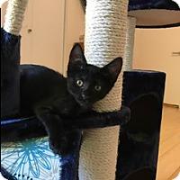 Adopt A Pet :: Freeway - Walnut Creek, CA