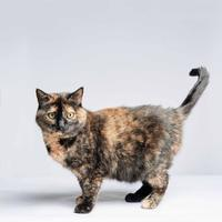 Adopt A Pet :: Skyrim - Wausau, WI