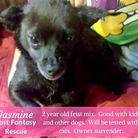 Adopt A Pet :: Jasmine - Ceres, VA