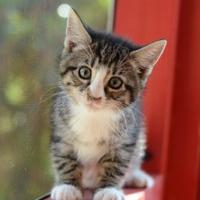 Adopt A Pet :: Andy - Dahlonega, GA