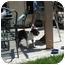 Photo 2 - Boston Terrier Dog for adoption in Temecula, California - Charlie