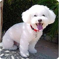 Adopt A Pet :: Nomar - La Costa, CA