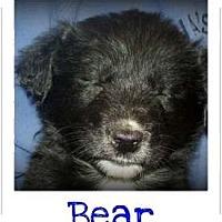 Adopt A Pet :: BABY BEAR - Southport, NC