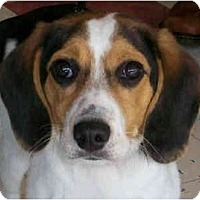 Adopt A Pet :: Little Lucy - Indianapolis, IN