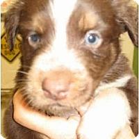 Adopt A Pet :: Royce - Kingwood, TX