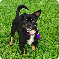 Adopt A Pet :: Alice - Burbank, CA