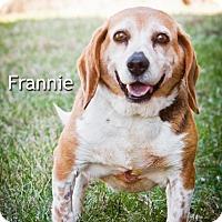 Adopt A Pet :: Frannie - Cedar Rapids, IA