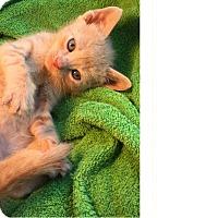 Adopt A Pet :: Teddy - Delray Beach, FL