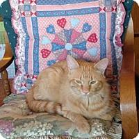 Adopt A Pet :: Prince Charming - Colorado Springs, CO