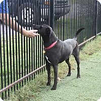 Adopt A Pet :: Leroy - Rockwall, TX