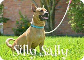 Cardigan Welsh Corgi Mix Dog for adoption in Houston, Texas - Silly Sally