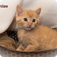 Adopt A Pet :: Bearclaw - San Juan Capistrano, CA