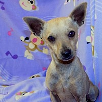Adopt A Pet :: Cane - York, SC