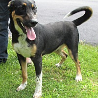 Adopt A Pet :: Harold - Reeds Spring, MO