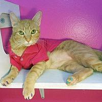 Adopt A Pet :: Olivia Rose - Glendale, AZ