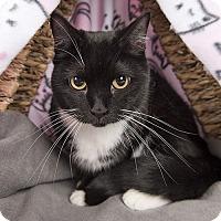 Adopt A Pet :: Boots - Wilmington, DE