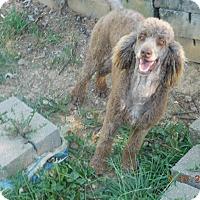 Adopt A Pet :: Suki & Zen - moscow mills, MO