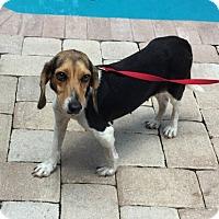 Adopt A Pet :: Keke - Tampa, FL