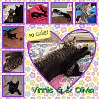 Adopt A Pet :: Vinnie & Olivia - Orange, CA