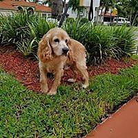 Adopt A Pet :: Robbie - Cape Coral, FL
