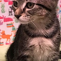 Adopt A Pet :: Jessie - Trexlertown, PA