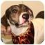 Photo 3 - Plott Hound Mix Dog for adoption in Cincinnati, Ohio - Blaze