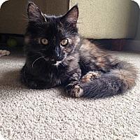 Adopt A Pet :: Marigold - Rohnert Park, CA