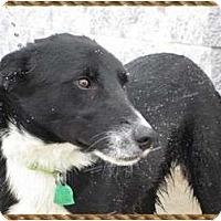 Adopt A Pet :: Adorable Sam - Boulder, CO