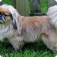 Adopt A Pet :: Pookie - Richmond, VA