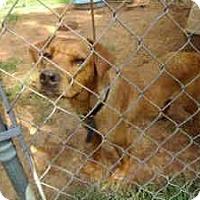 Adopt A Pet :: Audrey - latrobe, PA