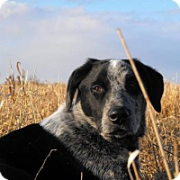 Adopt A Pet :: Che - Saskatoon, SK