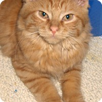 Adopt A Pet :: Cheesypuff - Richmond, VA