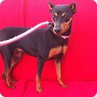 Adopt A Pet :: Pinky - Canoga Park, CA