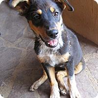 Adopt A Pet :: Lia - Santa Fe, NM