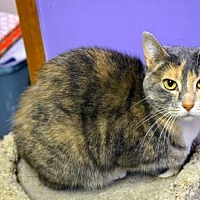Adopt A Pet :: Miss Priss - Milwaukee, WI